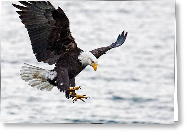 Flying Eagles Greeting Cards - Flaps Down... Gear Down Greeting Card by Randy Hall