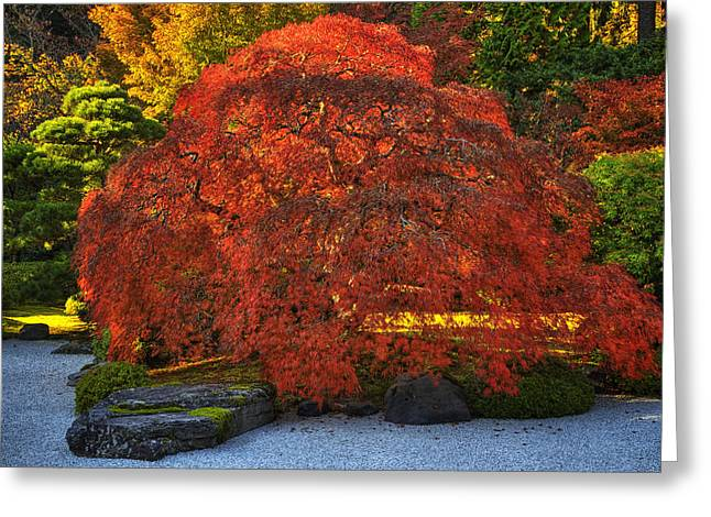 Red Maple Tree Branches Greeting Cards - Flat Garden Maple Greeting Card by Mark Kiver