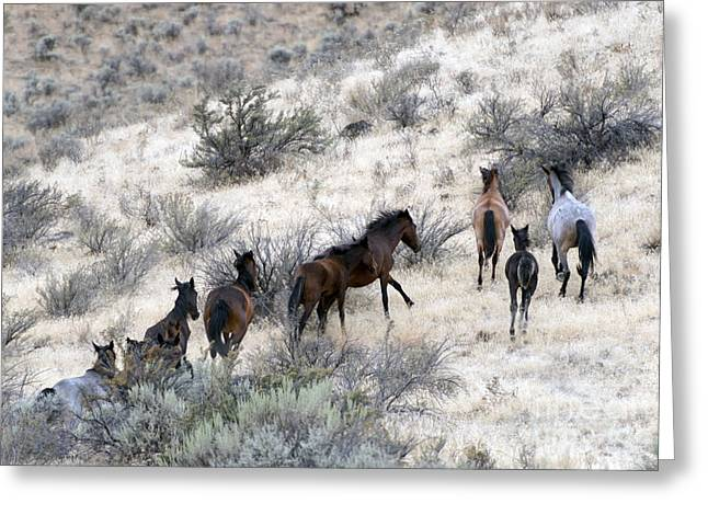 Wild Horses Photographs Greeting Cards - Fleeing up the Draw Greeting Card by Mike  Dawson
