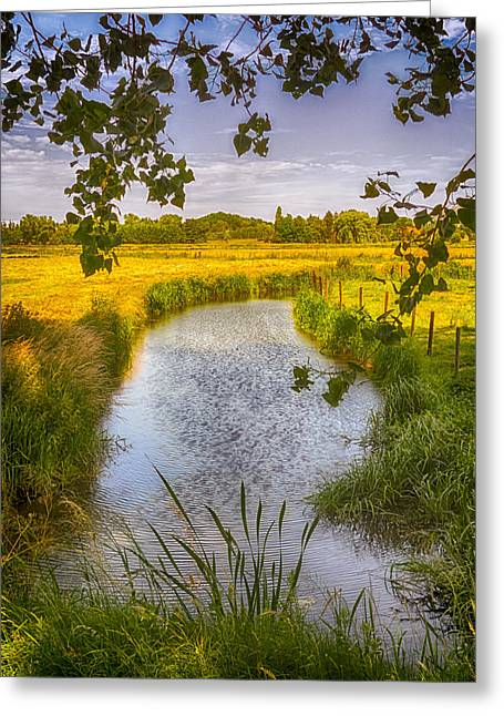 Lush Colors Greeting Cards - Flemish Creek Greeting Card by Wim Lanclus