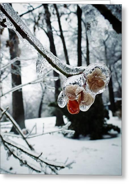 Bare Trees Digital Greeting Cards - Fleur Dhiver Greeting Card by Natasha Marco