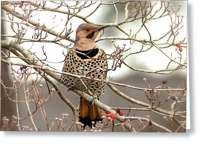 Travis Truelove Photography Greeting Cards - Flicker - Alabama State Bird - Attention Greeting Card by Travis Truelove