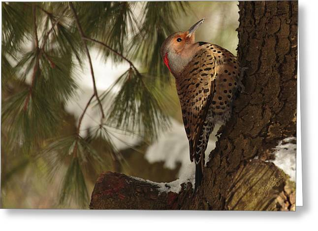 Woodpeckers Greeting Cards - Flicker Greeting Card by Everet Regal