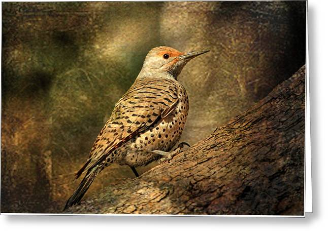 Flicker In A Tree Greeting Card by Donna Kennedy