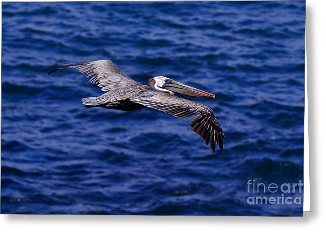 Pelicans Over Ocean Greeting Cards - Flight Greeting Card by Diana Vitoshka