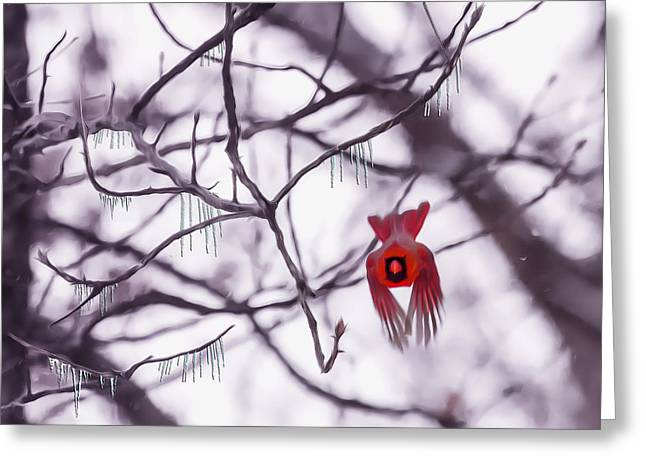 Male Cardinal Greeting Cards - Flight Of A Winter Cardinal Greeting Card by Bill Tiepelman