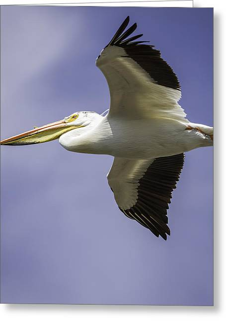 Flying White Pelicans Greeting Cards - Flight Of The American White Pelican Greeting Card by Thomas Young