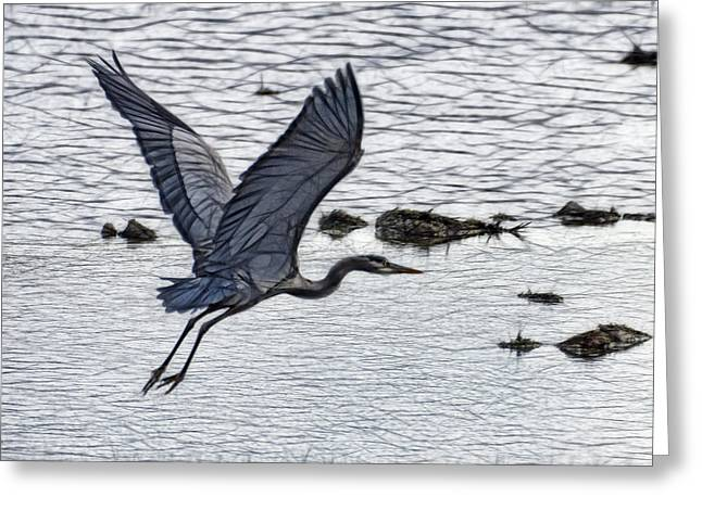 Pond In Park Greeting Cards - Flight Of The Blue Heron W3872B Greeting Card by Wes and Dotty Weber