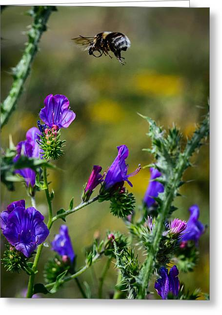 Bee In Flight Greeting Cards - Flight Of The Bumblebee Greeting Card by Marco Oliveira