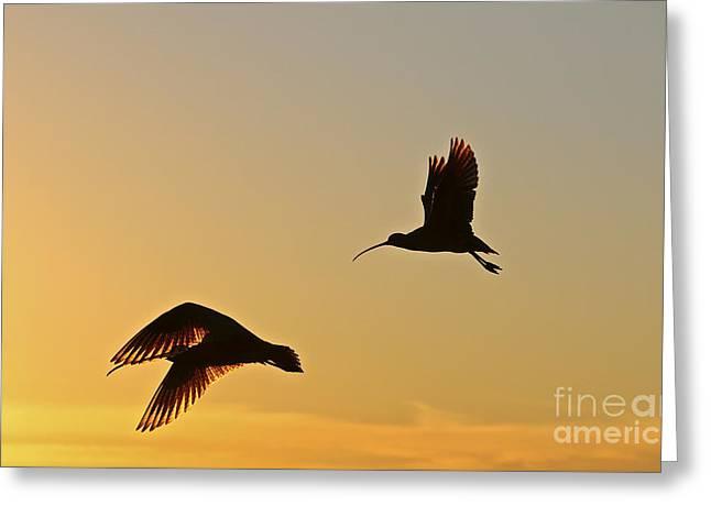 Beach In Santa Barbara Greeting Cards - Flight of the Curlews Greeting Card by Heidi Peschel