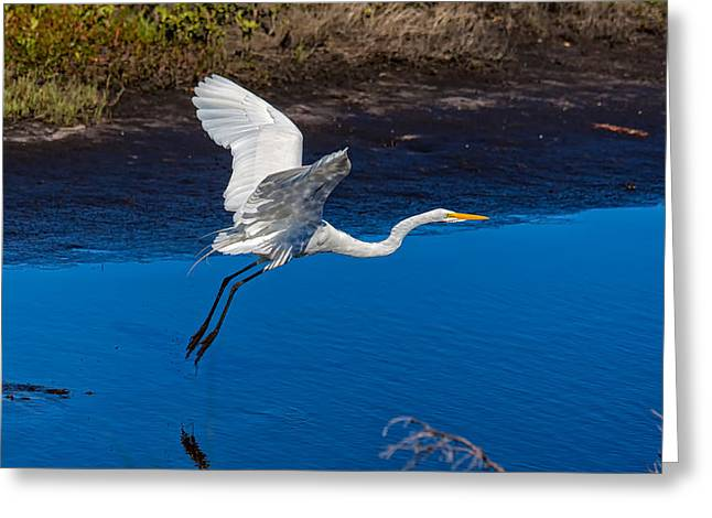 Merrit Greeting Cards - Flight of the Egret Greeting Card by John Bailey