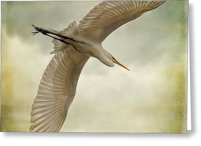 Wildlife Refuge. Greeting Cards - Flight of the Egret Greeting Card by Priscilla Burgers