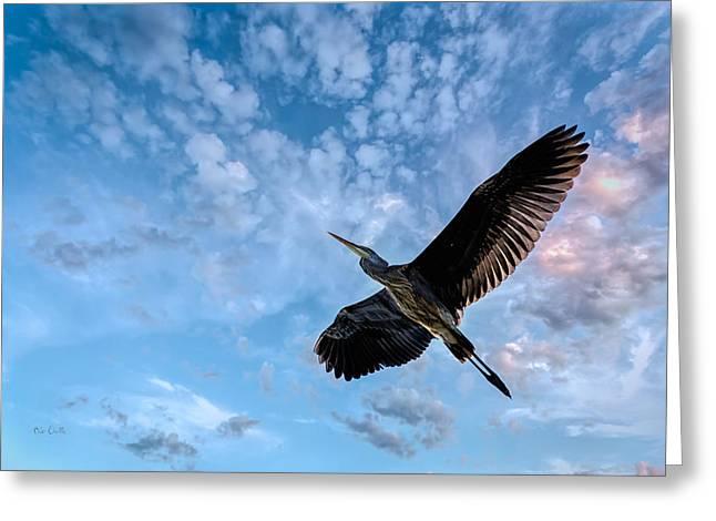 Flight Of The Heron Greeting Card by Bob Orsillo
