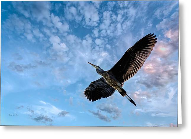 Big Sky Greeting Cards - Flight Of The Heron Greeting Card by Bob Orsillo