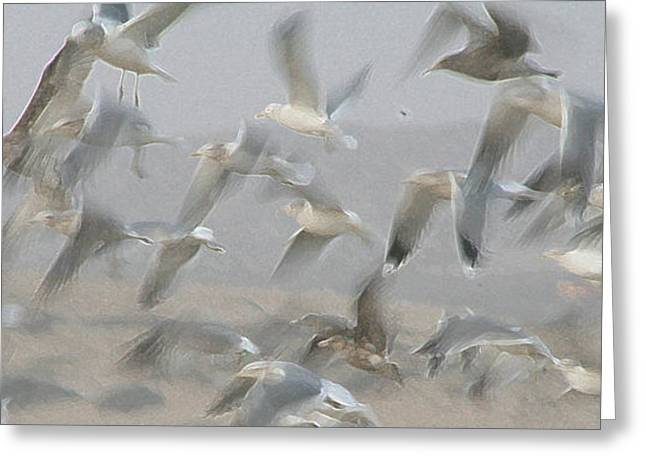 Flying Seagull Greeting Cards - Flight of the Seagulls Abstract Greeting Card by Bob and Jan Shriner