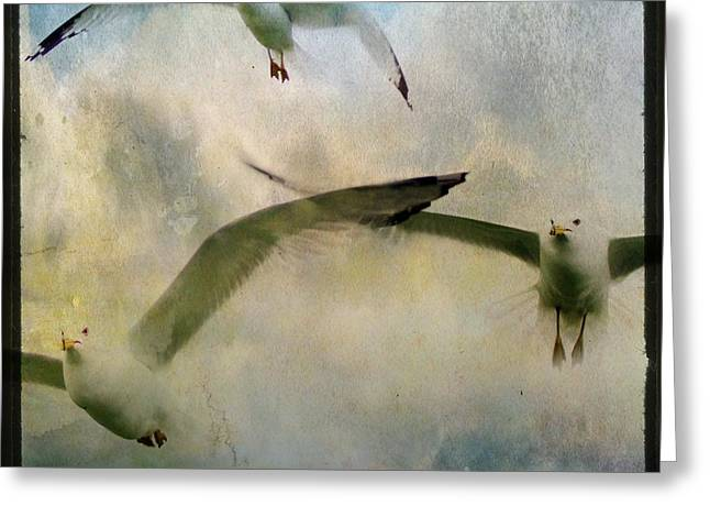 Flying Seagull Greeting Cards - Flight Of The Seagulls Greeting Card by Gothicolors Donna Snyder