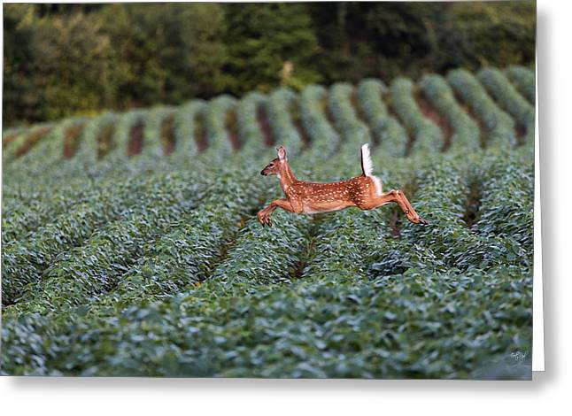 White-tail Deer Greeting Cards - Flight of the White-tailed Deer Greeting Card by Everet Regal