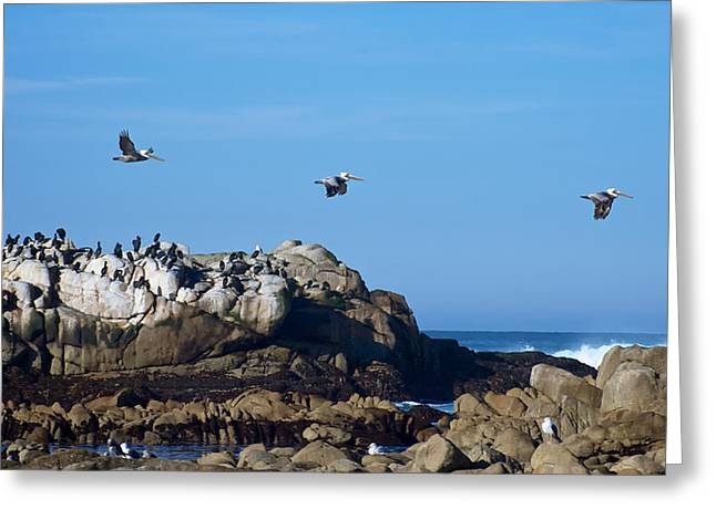 Pacific Grove Beach Greeting Cards - Flight Patterns Greeting Card by Mary Lee Dereske
