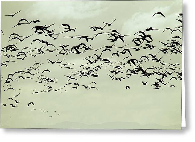 Bird Flight Greeting Cards - Flight Greeting Card by Rebecca Cozart