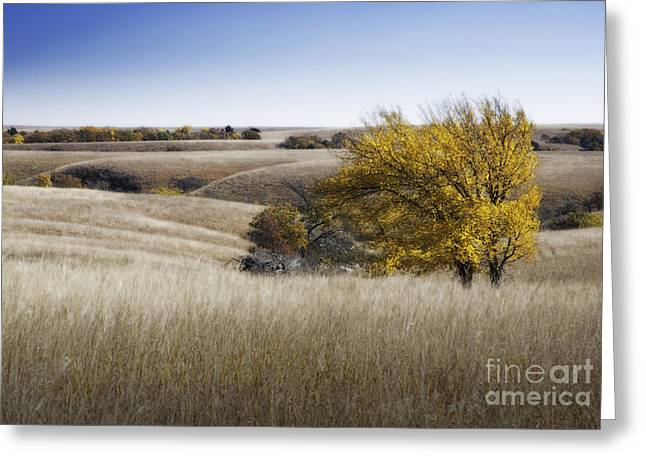 Flint Greeting Cards - Flint Hills Autumn 013 Greeting Card by Fred Lassmann