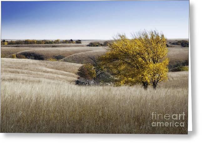 Flint Greeting Cards - Flint Hills Autumn 013 Greeting Card by Fred Lassmann