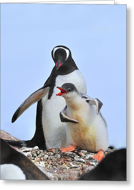 Seabirds Greeting Cards - Flipper Flexing Greeting Card by Tony Beck