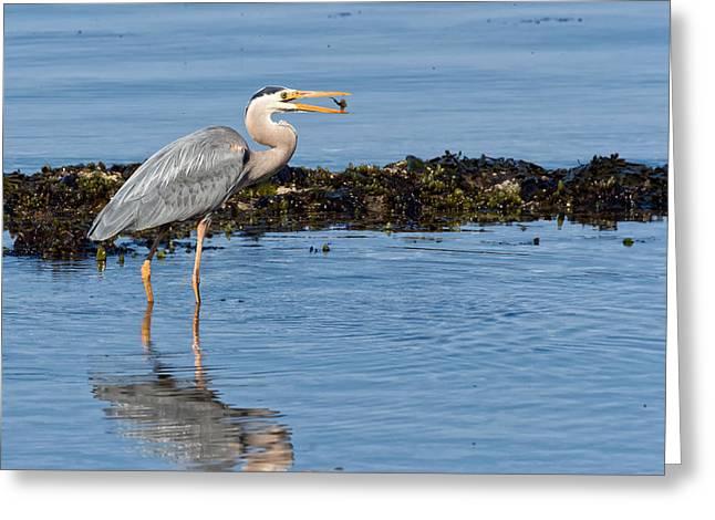 Pacific Ocean Prints Digital Art Greeting Cards - Flipping Cabezon Greeting Card by Kathleen Bishop