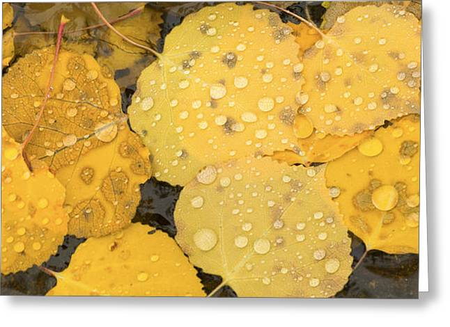Fall Trees With Stream. Greeting Cards - Floating Aspens Greeting Card by Joye Ardyn Durham