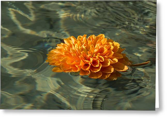 Coloured Greeting Cards - Floating Autumn - Chrysanthemum Blossom in the Fountain Greeting Card by Georgia Mizuleva
