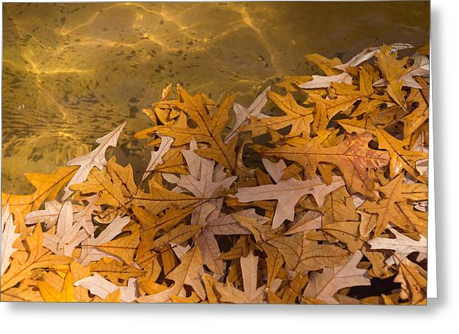 Disarray Greeting Cards - Floating Chaos - Fallen Oak Leaves in the Fountain Greeting Card by Georgia Mizuleva