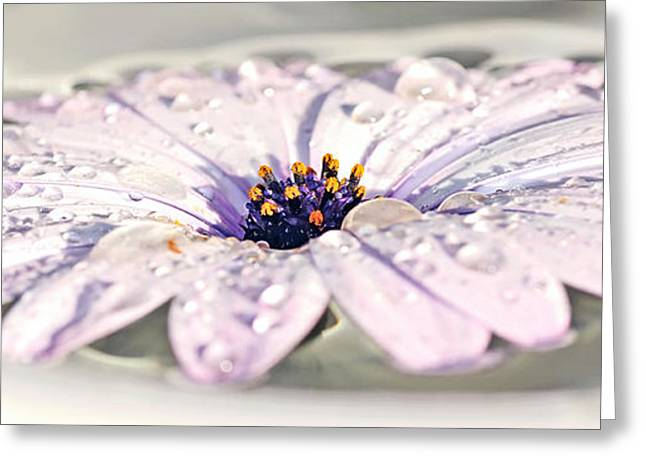 Wet Petals Greeting Cards - Floating Daisy Greeting Card by Kaye Menner