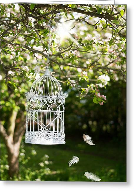 Bird Cages Greeting Cards - Floating Feathers Greeting Card by Amanda And Christopher Elwell
