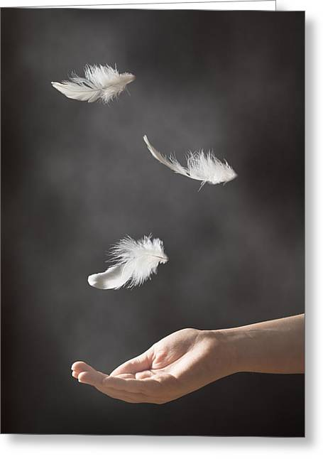 Floating Feathers Greeting Card by Amanda Elwell