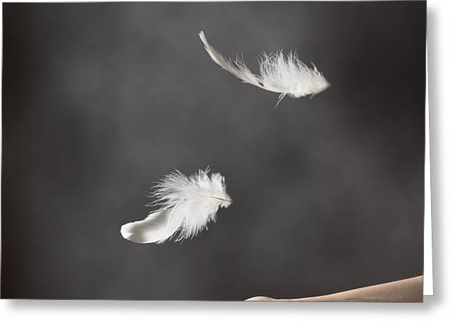 Floating Feathers Greeting Card by Amanda And Christopher Elwell