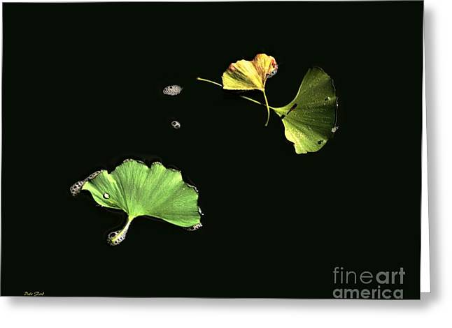 Tree Leaf On Water Digital Art Greeting Cards - Floating Ginko Leaves Greeting Card by Dale   Ford