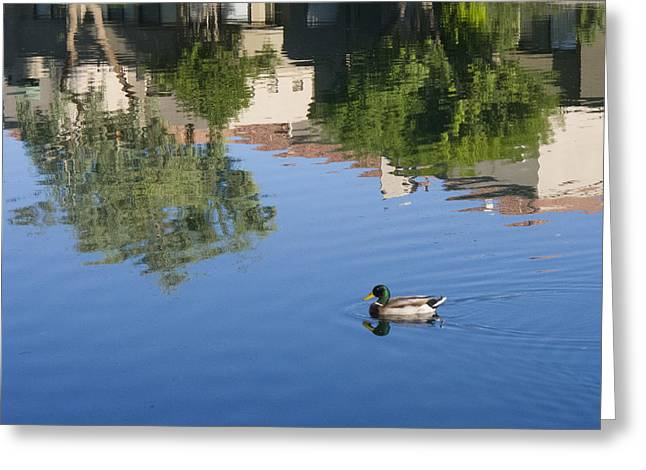 Floating In Reflections Greeting Card by Susan Stone