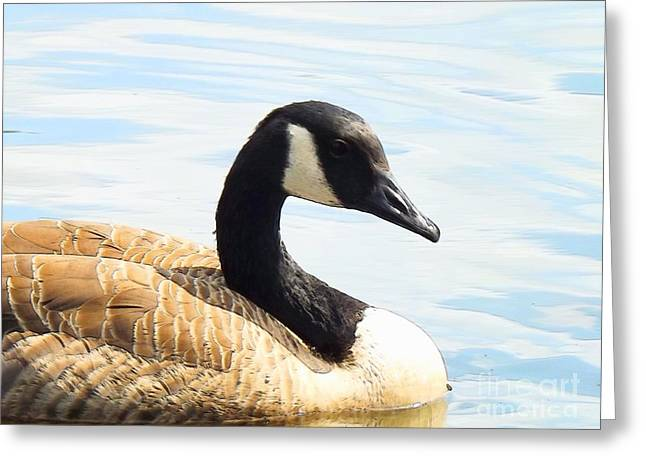 Mother Goose Greeting Cards - Floating In The Sunshine Greeting Card by Robyn King