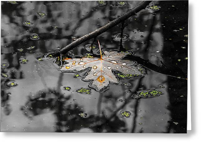 Trees Reflecting In Water Greeting Cards - Floating in the water Greeting Card by Tracy Winter