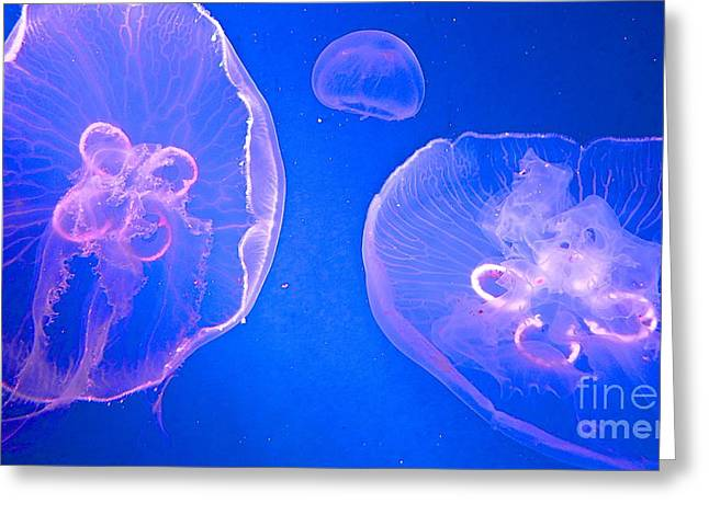 Jelly Fish Greeting Cards - Floating Jelly Fish Greeting Card by Cheryl Cutler