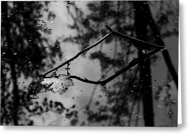 Trees Reflecting In Water Greeting Cards - Floating Leaf Greeting Card by Tracy Winter