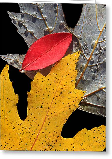 Overturn Greeting Cards - Floating leaves Greeting Card by Carolyn Derstine