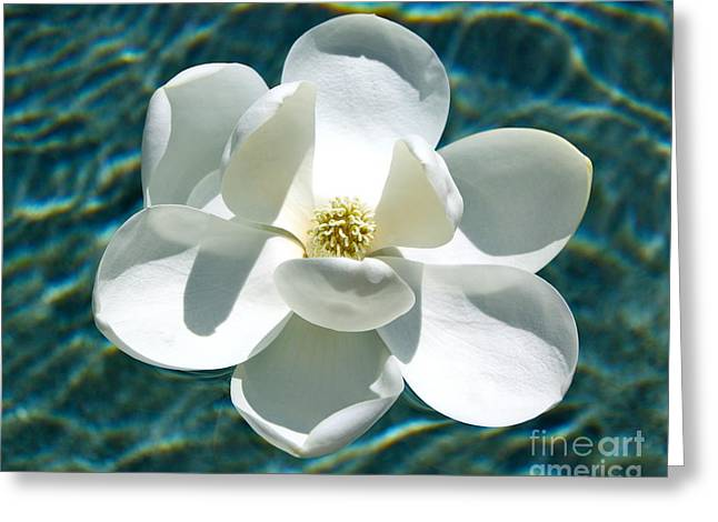 Southern Flowers Greeting Cards - Floating Magnolia Greeting Card by Carol Groenen