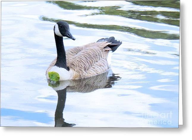 Water Fowl Greeting Cards - Floating On A Lily Pad Greeting Card by Robyn King