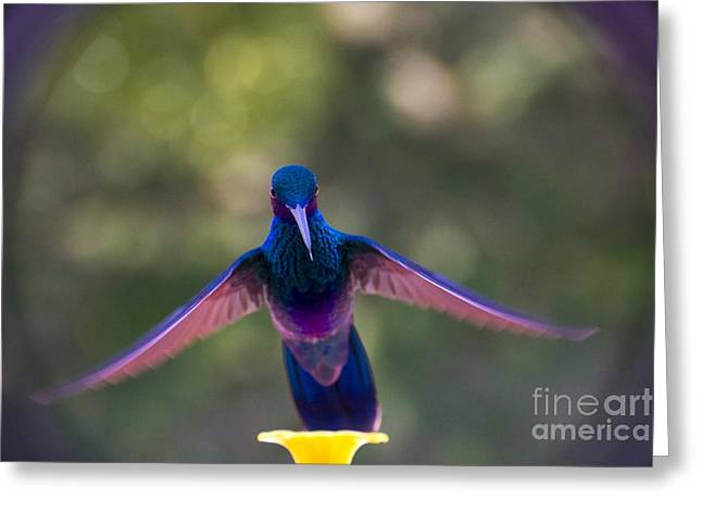 Hovering Greeting Cards - Floating On Air Greeting Card by Al Bourassa