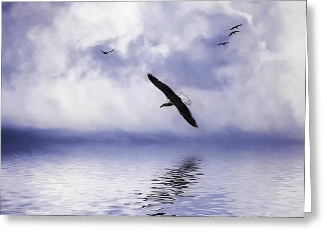 Flying Seagull Greeting Cards - Floating On Air Greeting Card by Diane Schuster