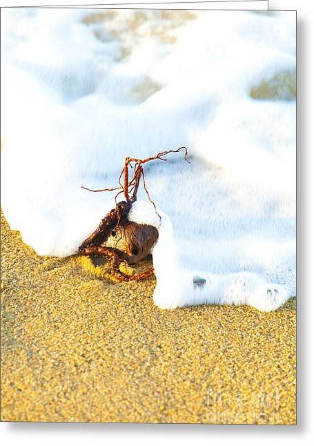 Golden Greeting Cards - Floating Seed Greeting Card by Andrew Wood