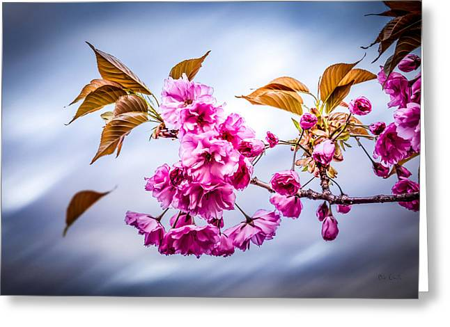 Meditate Greeting Cards - Floating To Earth Greeting Card by Bob Orsillo