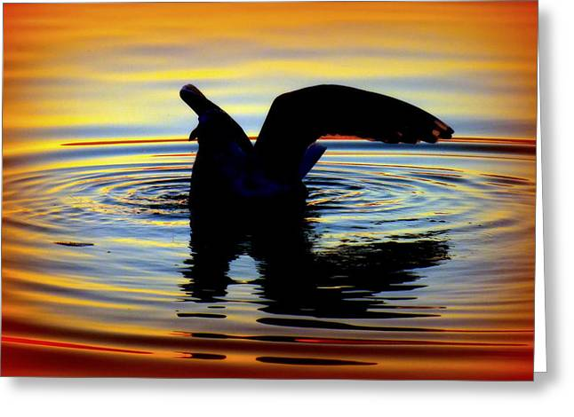 Reflection In Water Greeting Cards - Floating Wings Greeting Card by Karen Wiles