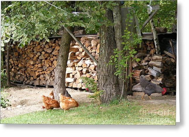 Vermont Rooster Greeting Cards - Flock at the woodpile in the evening Greeting Card by Susan Russo