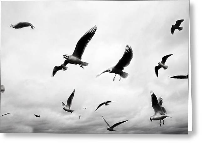 Seagull Greeting Cards - Flock Greeting Card by Mark Rogan